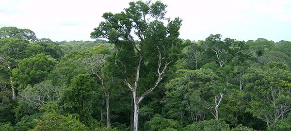 Foresta amazzonica importante per bilancio CO2