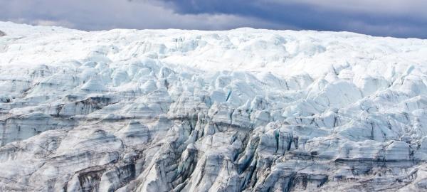 Trovata foresta fossile in Groenlandia